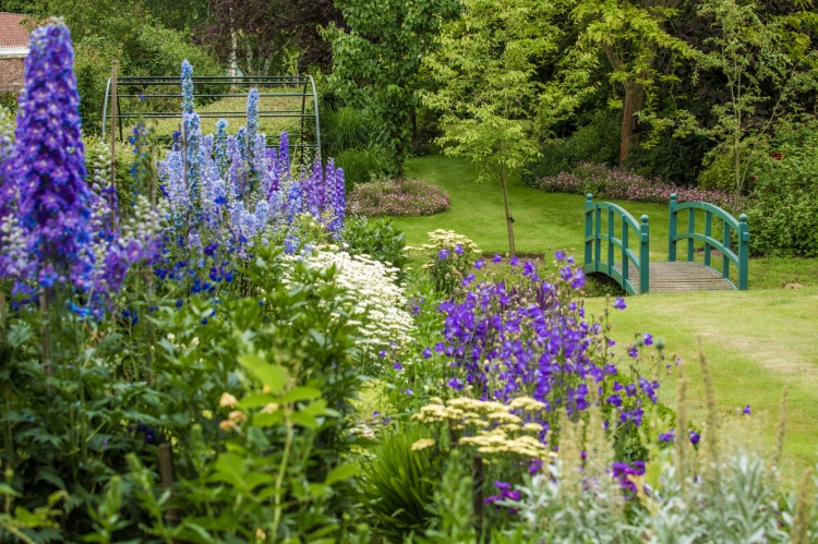 Garden lupins and bridge