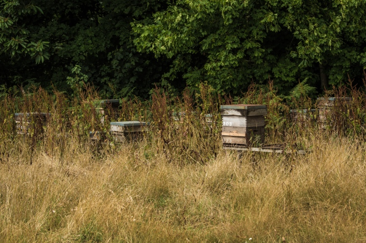 Beehives panoramic