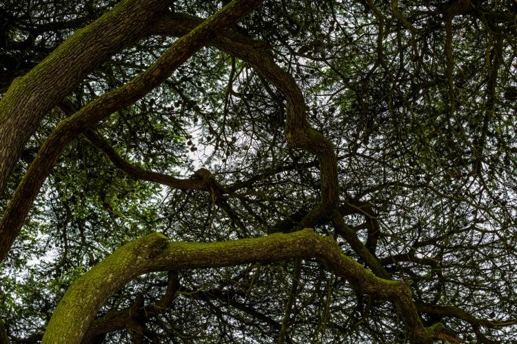 Woodlands tree sky